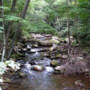 Cascade Hike, Viginia
